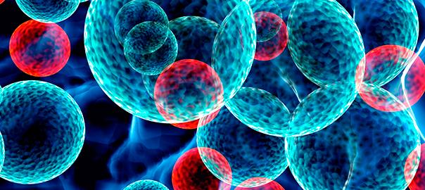 Molecular roadmap of human stem cell states