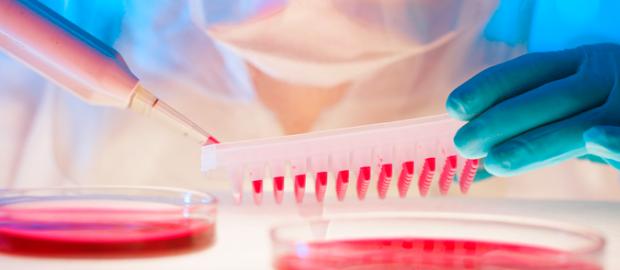 cultivo de células madre