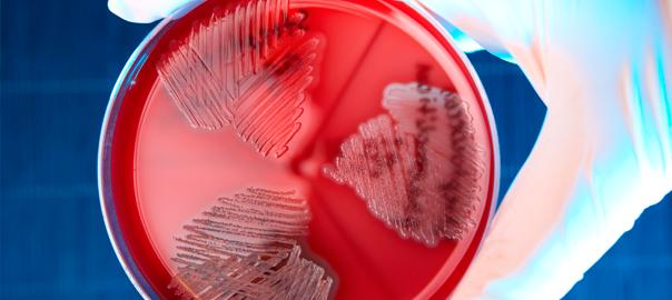 noticias de células madre