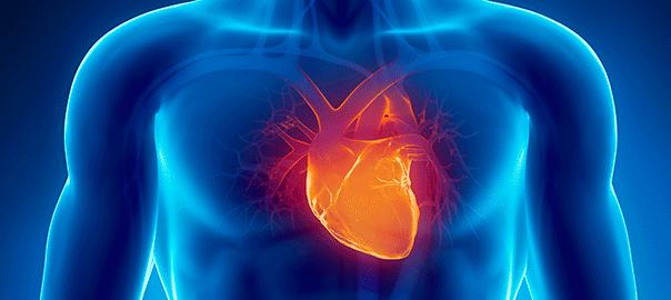 corazon infartado